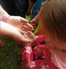 We found a baby frog in our Yoxall Forest School