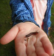 A worm we have found in our Yoxall Forest School